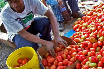 LAC_man_with_tomatoes_2